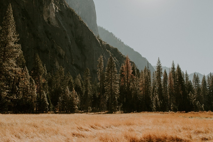 Fields of Yosemite - Katie Ruther