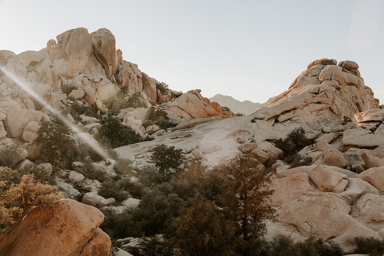 Joshua Tree iii - Katie Ruther