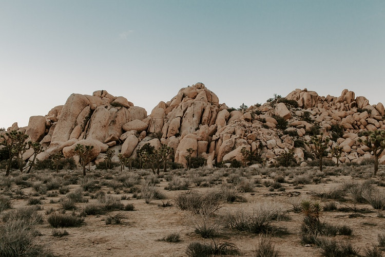 Joshua Tree iv. - Katie Ruther