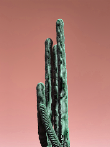Blush Cactus - Kelsee Becker Photography