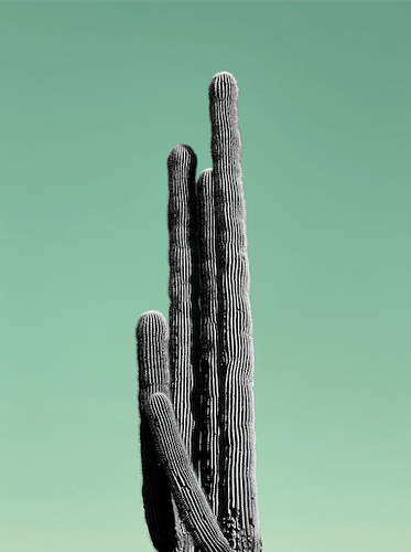 Mint Cactus - Kelsee Becker Photography