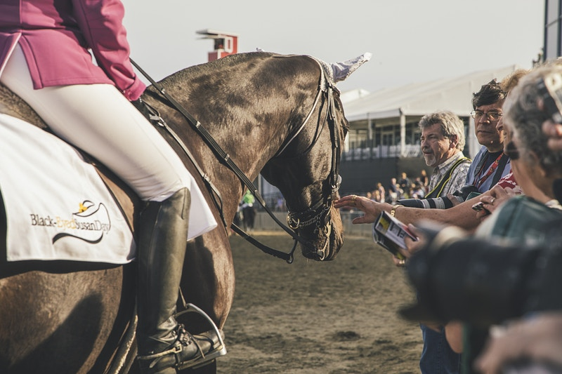 The Preakness - Kendelyn Ouellette