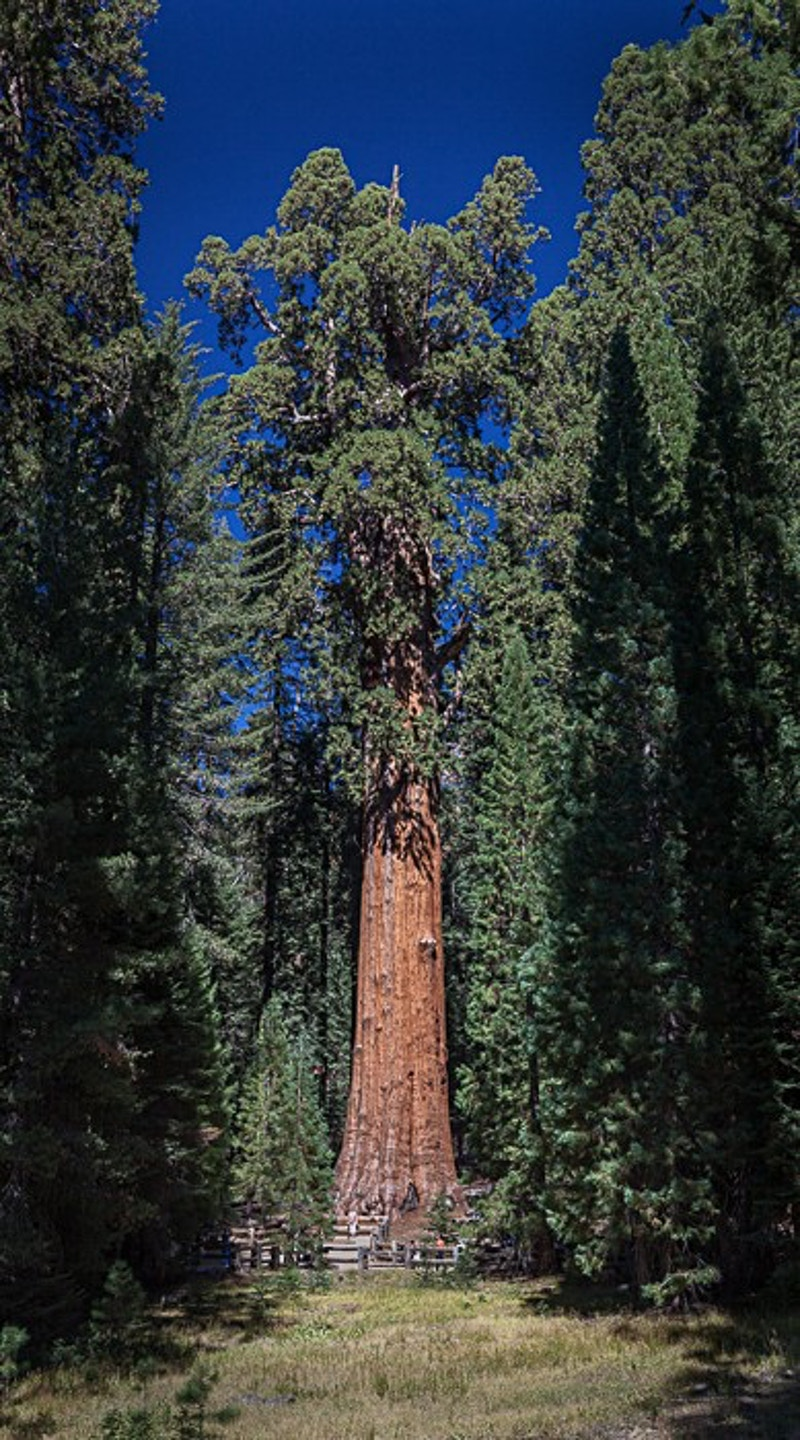 General Sherman, Sequoia NP, CA - Kirk Marshall Photography