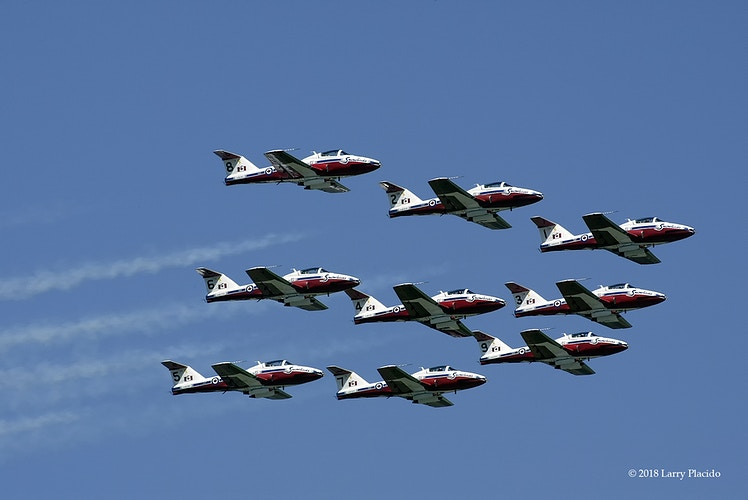 Flock of Snowbirds - Larry Placido Photography