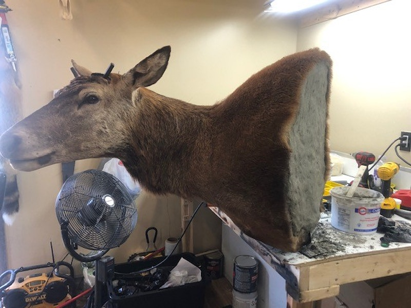 Red Stag - Lone Wolf Taxidermy