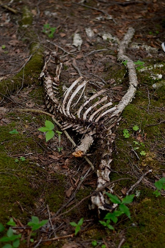 bones - Margaret Murphy Photography