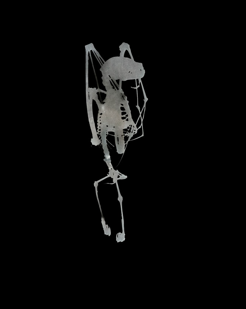 Bat Skeleton - Marie-Elena Schembri Photographer & Visual Artist