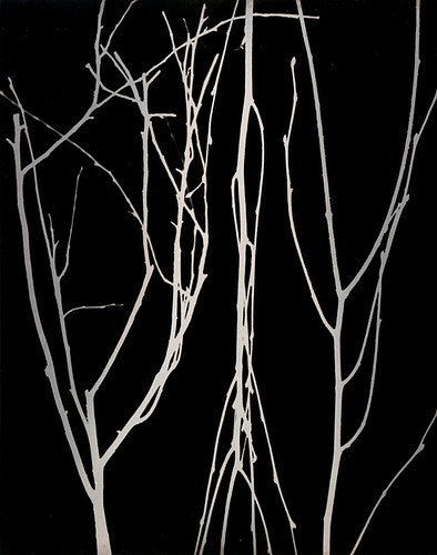 Birch - Marie-Elena Schembri Photographer & Visual Artist