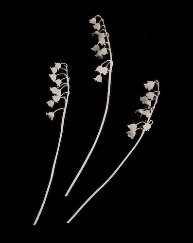 Lily of the Valley - Marie-Elena Schembri Photographer & Visual Artist