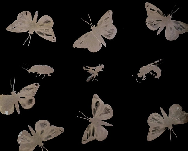 Insects - Marie-Elena Schembri Photographer & Visual Artist