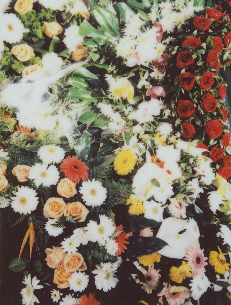 Flowers Cats And Death - Matilde Travassos