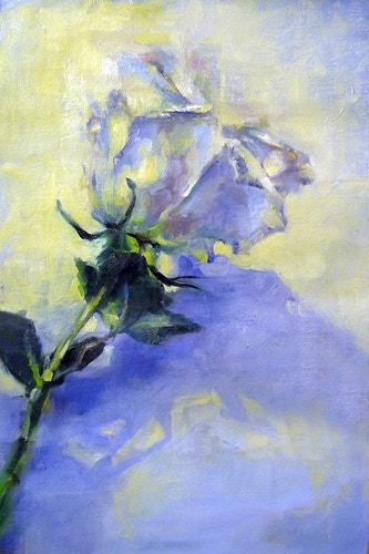 White Rose on White - Meghan Taylor Art