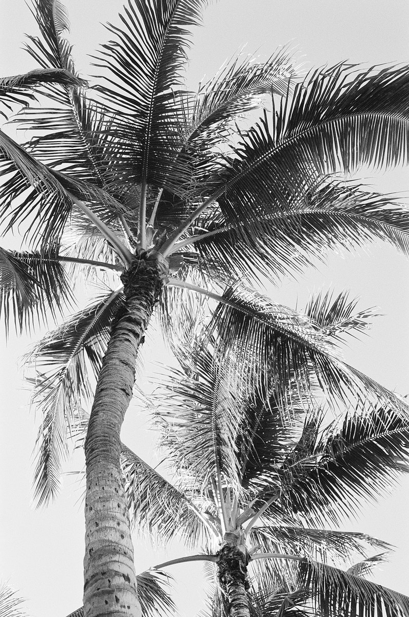 Oahu Palms - Black and White - Melanie Faun