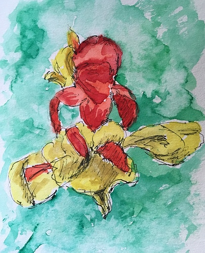 Red and Yellow Cannas - Mini - Penney De Pas