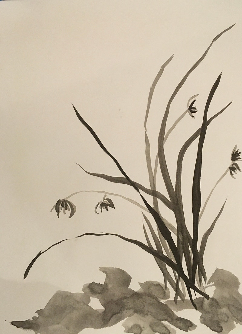 Wild Orchid with Rocks (B&W Ink) - Penney De Pas