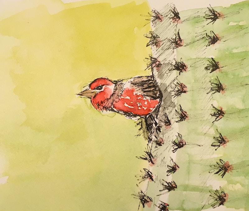 PeekABoo: Red House Finch and Saguaro - Mini - Penney De Pas