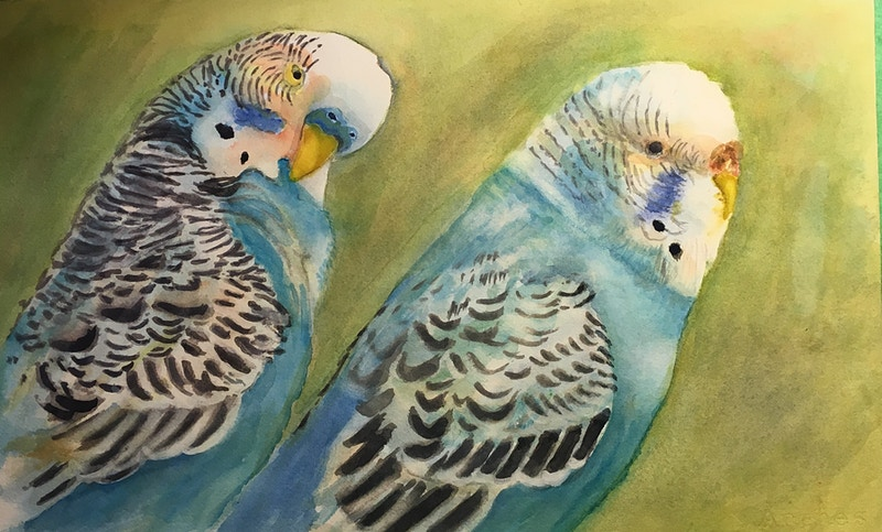 Two Blue Parakeets - Penney De Pas
