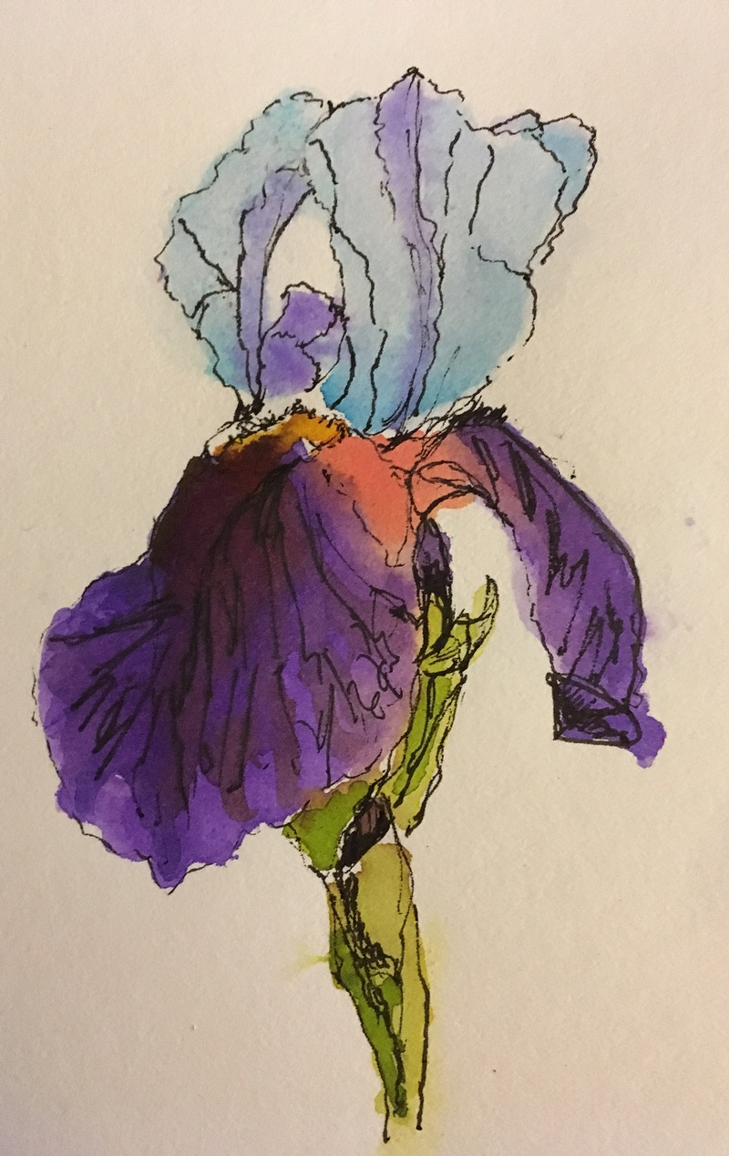 Blue and Purple Bearded Iris - Mini - Penney De Pas