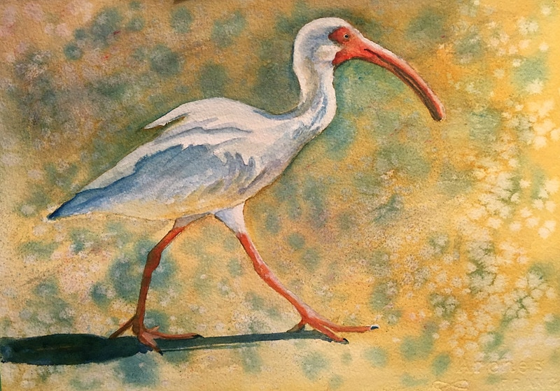 Walking Ibis - Penney De Pas