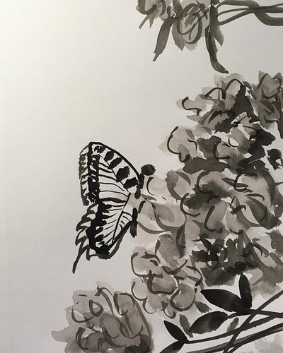 Butterfly on Azalea (B&W Ink) - Penney De Pas