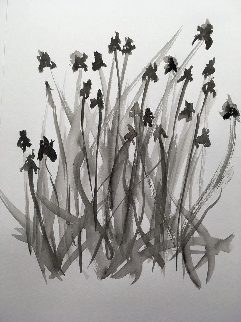 Field of Irises (B&W Ink) - Penney De Pas