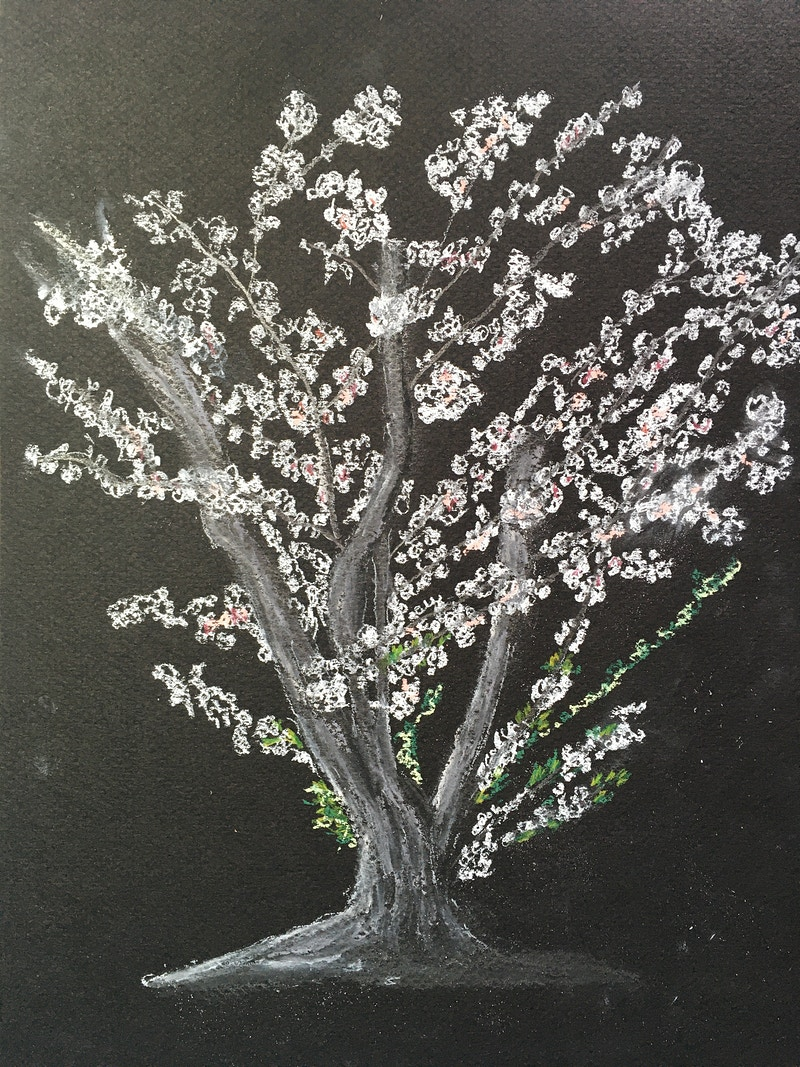 White Cherry Tree in Spring - Penney De Pas