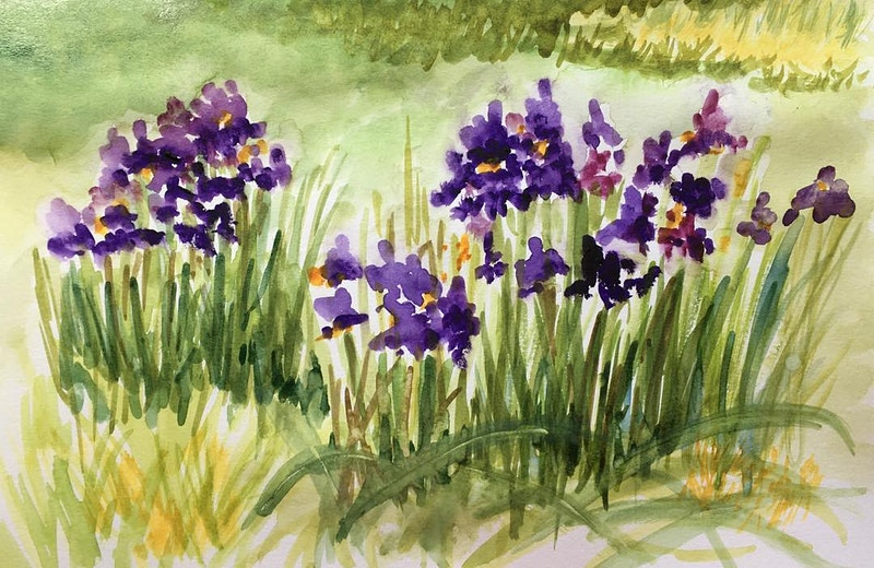 Field of Irises - Penney De Pas