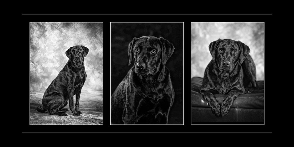 Pets - Portraits by Tiffany