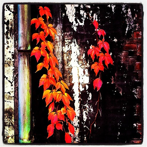 Instagram Images - Photography & Images by Ron Donofrio