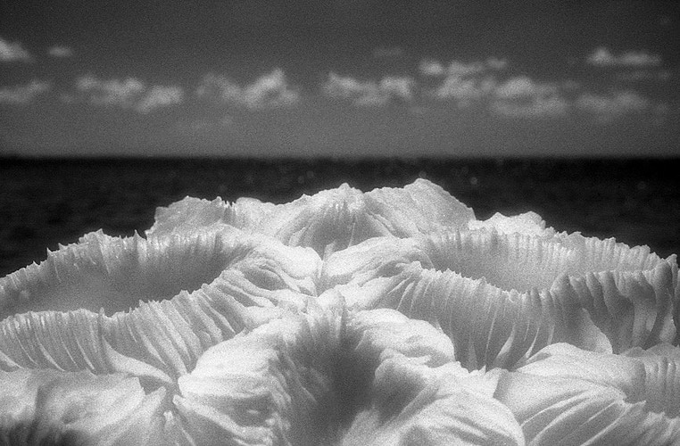 From The Sea - Roy Quesada photographer