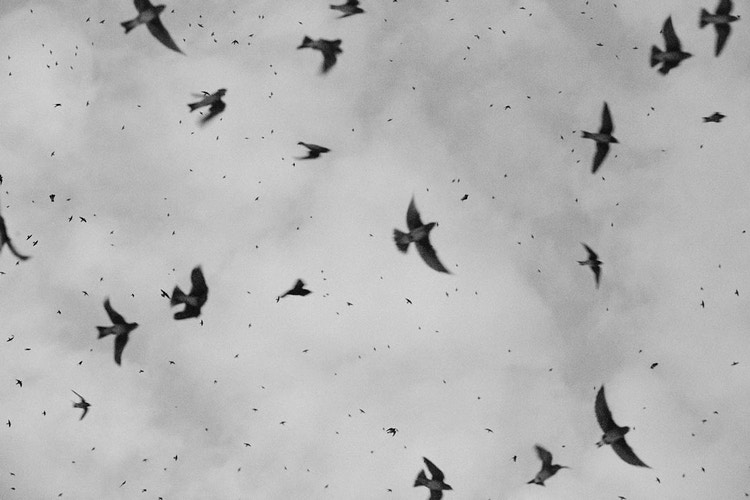 Birds Bw - Sam Angel Photography