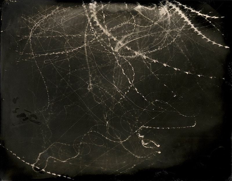 Moths In Flight Wetplate - Sam Angel Photography