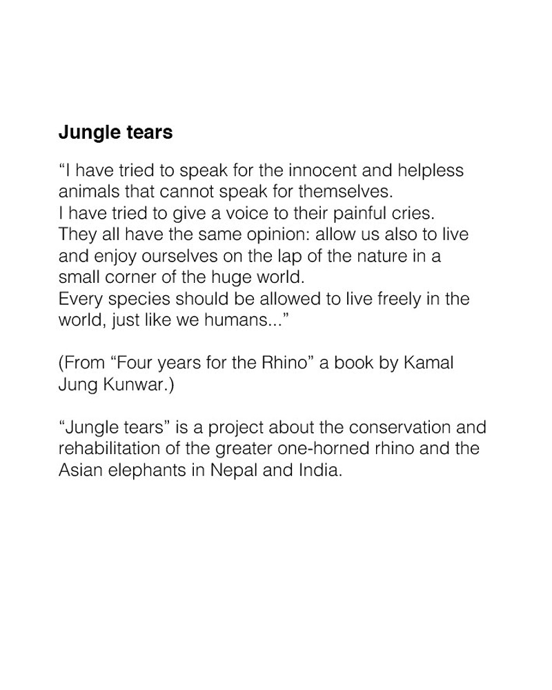 Jungle Tears - Serena De Sanctis