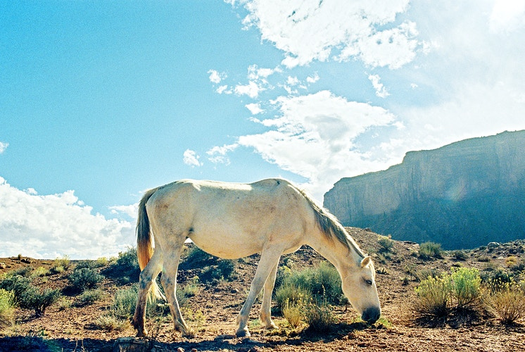 Monument Valley Horse I - Taylor McCutchan Photography -Northern, California wedding photographer-