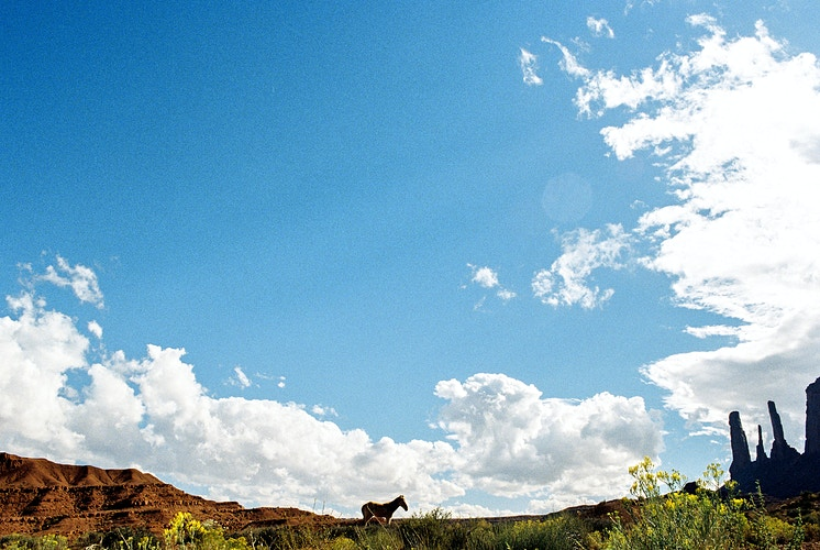 Monument Valley Horse II - Taylor McCutchan Photography -Northern, California wedding photographer-