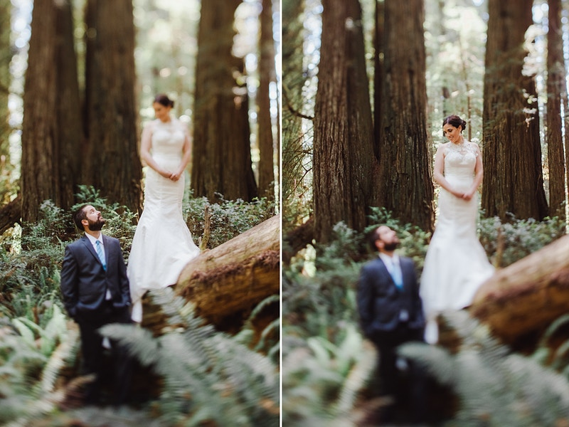Owen Gabby Elopement In The Redwoods Northern California Redwood Wedding Photographer - Taylor McCutchan Photography -Northern, California wedding photographer-