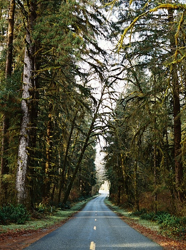 Road to the HOH - Taylor McCutchan Photography -Northern, California wedding photographer-