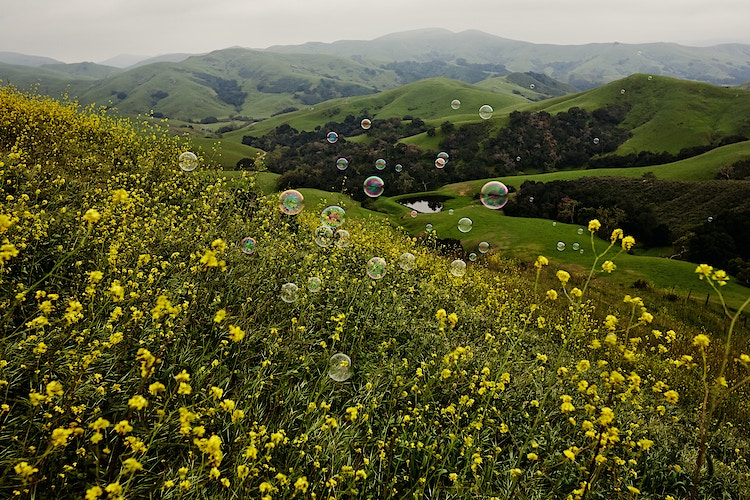 Bubblescapes II - Taylor McCutchan Photography -Northern, California wedding photographer-