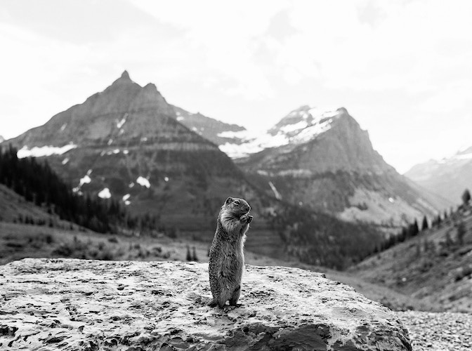 Glacier NP Ground Squirrel - Taylor McCutchan Photography -Northern, California wedding photographer-