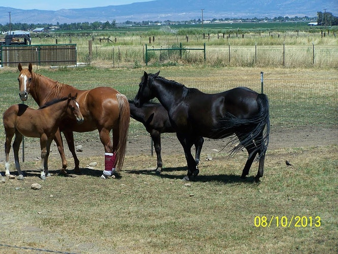 Mares and Babies at Diamond J Ranch -