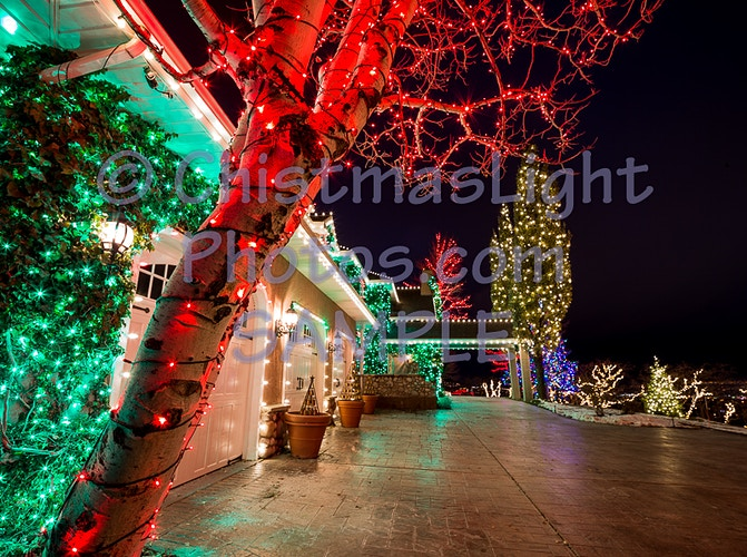 50' oak columnar trees with Christmas lights - Vance Brand Photography