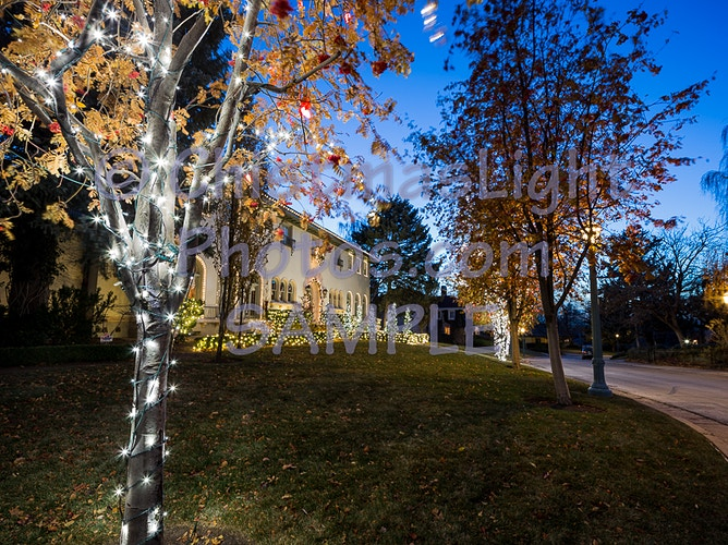 Pure white LED Christmas lights - Vance Brand Photography