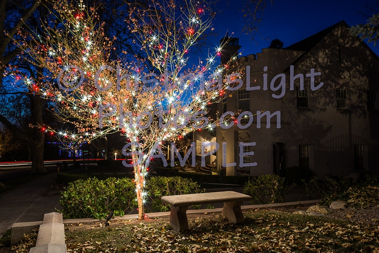 Red and white Christmas lights in a deciduous tree - Vance Brand Photography