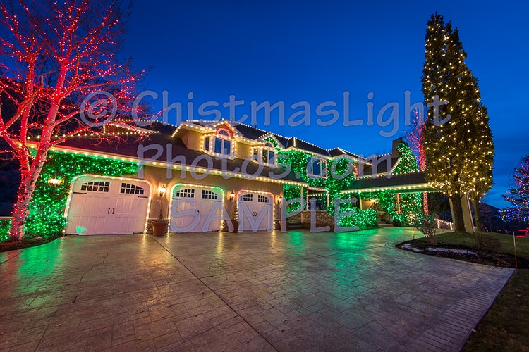 Christmas Lights in ivy - Vance Brand Photography