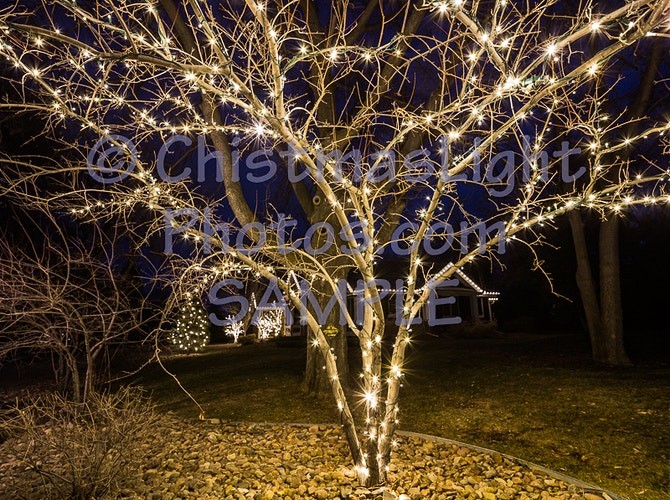 Small deciduous tree with Christmas lights - Vance Brand Photography