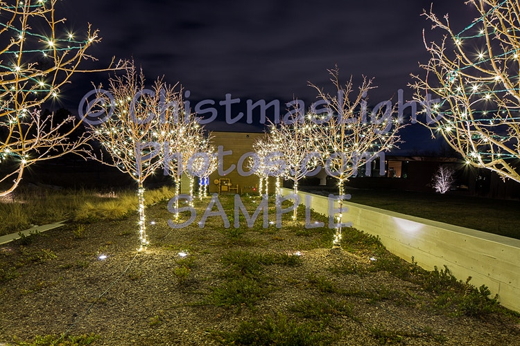 Christmas lights on trees in a row - Vance Brand Photography