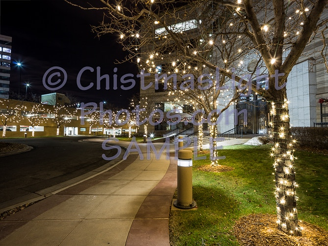 Office Christmas tree lights lightly done - Vance Brand Photography