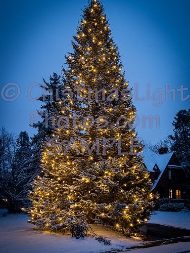 550 C9 LED bulbs in 30' Christmas tree - Vance Brand Photography