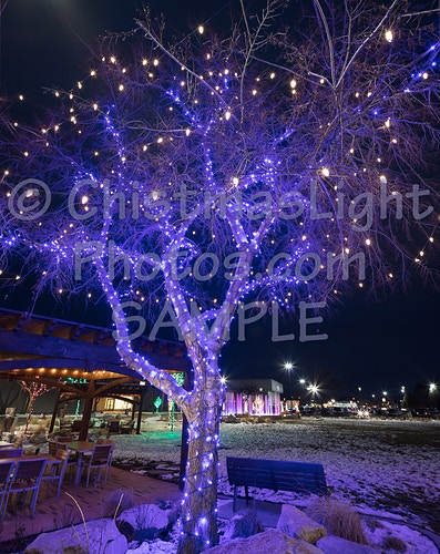 Blue Christmas Lights on White - Vance Brand Photography