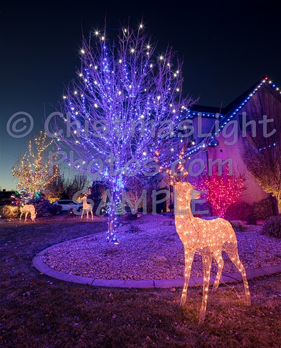 Christmas lights in a tree with deer - Vance Brand Photography